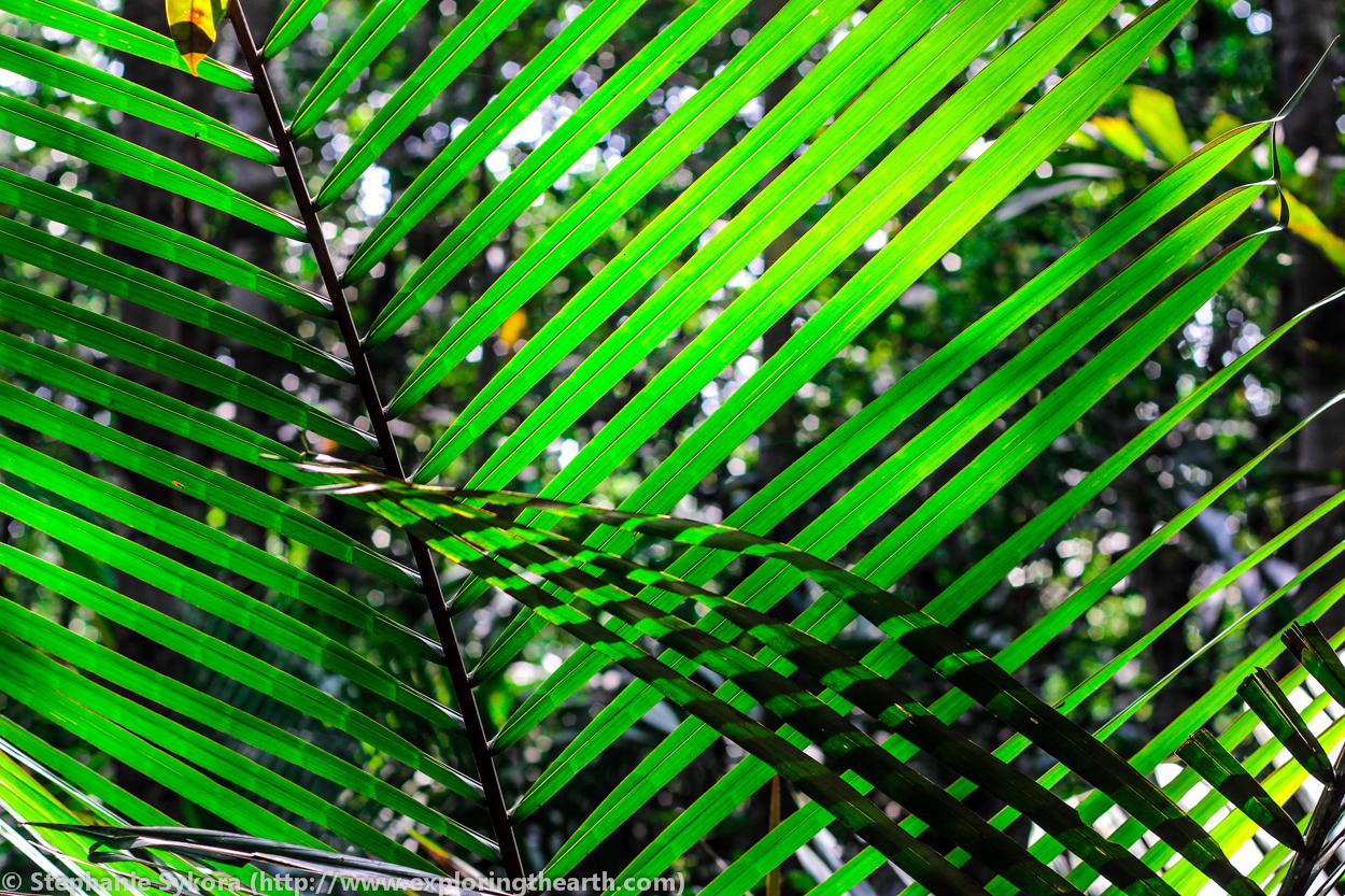 Amazon Rainforest plants bamboo leaves Brazil forest jungle adventure ...