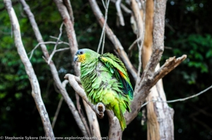 Amazon Rainforest Canopy Brazil forest jungle adventure travel jungle bird green macaw South America