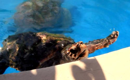 turtleTAMAR