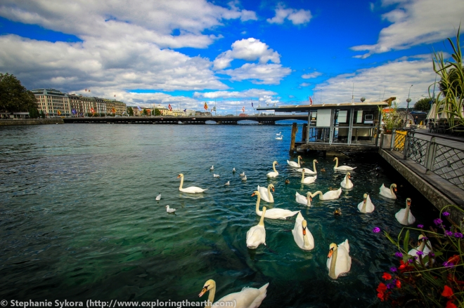 Geneva Lake, Switzerland, Europe, Adventure, Travel, CERN, Photography, Swans