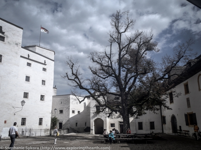 Hohensalzburg Castle, Austria, Europe, Travel, Castles, Tree, White Tree of Gondor, Photography