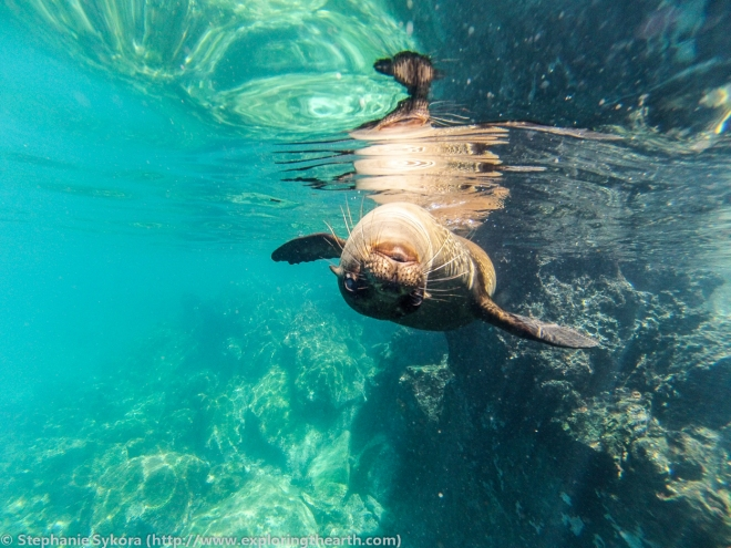 Galapagos, Islands, Galapagos, Ecuador, South America, Darwin, Evolution, Travel, Adventure, Tourism, Sea Lion